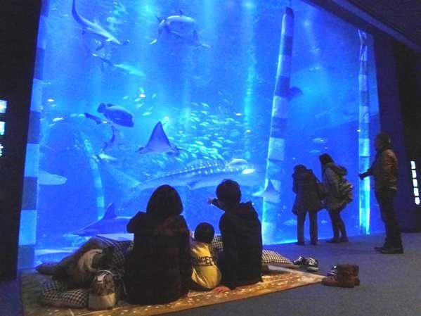 画像提供:のとじま臨海公園水族館