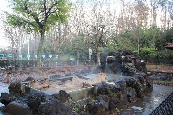 2014年3月のカピバラ温泉(画像提供:こども動物自然公園)