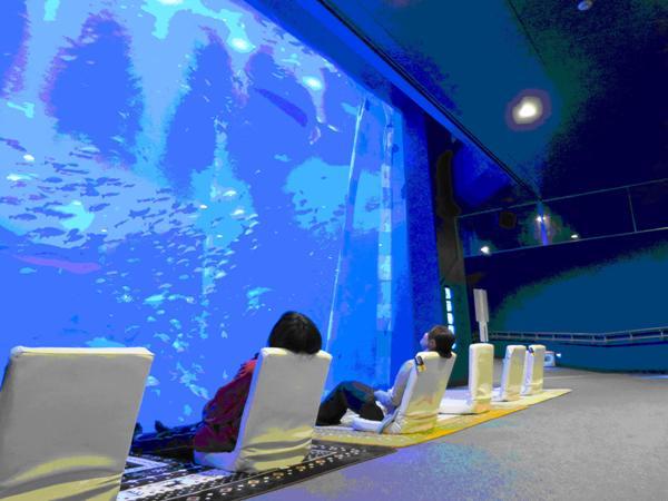 画像:のとじま水族館提供