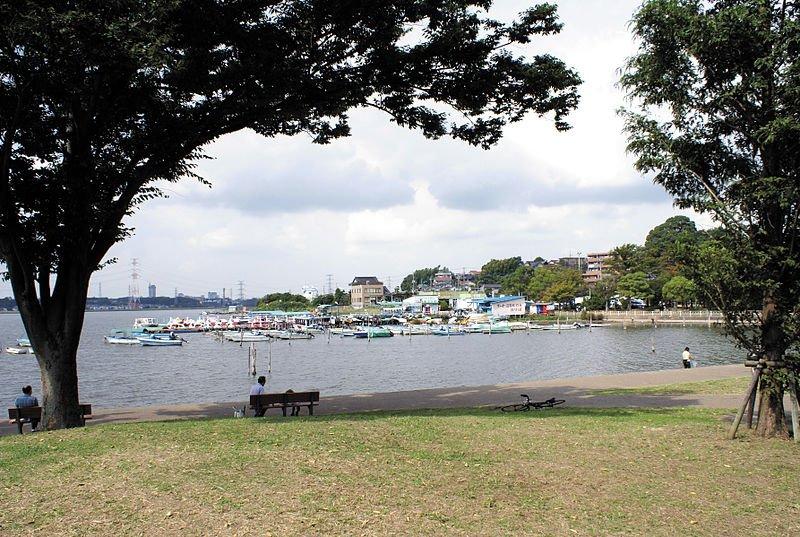 我孫子市の手賀沼公園(岡部碩道さん撮影、Wikimedia Commonsより)