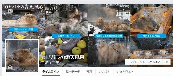 カピバラの露天風呂Facebookのトップページ