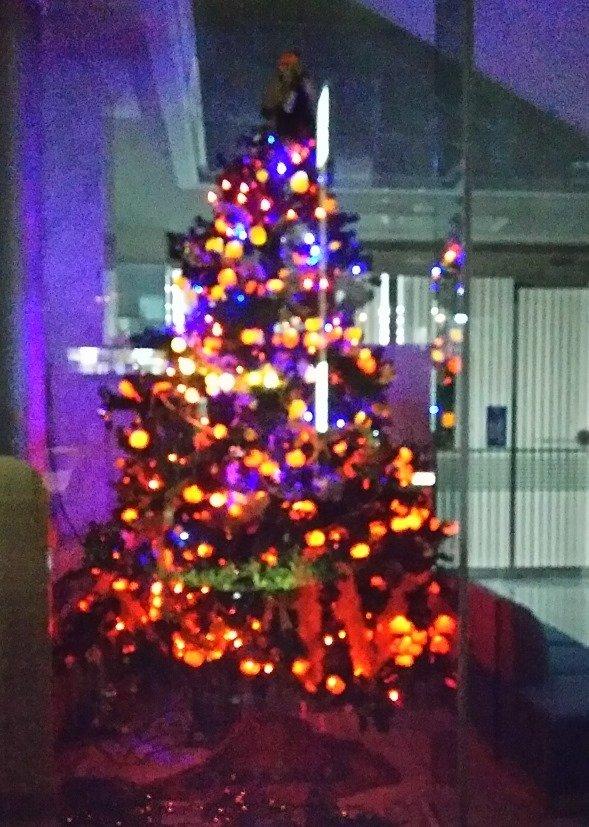 みかんツリーが輝く八幡浜のクリスマス(写真提供:西川久美さん)