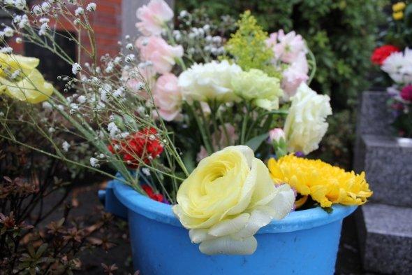 バケツの中で、薔薇の花が雨に濡れていた