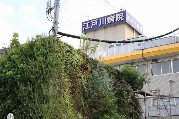 江戸川病院へ
