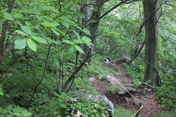 草木の生い茂る山道(画像はせたな観光協会提供)