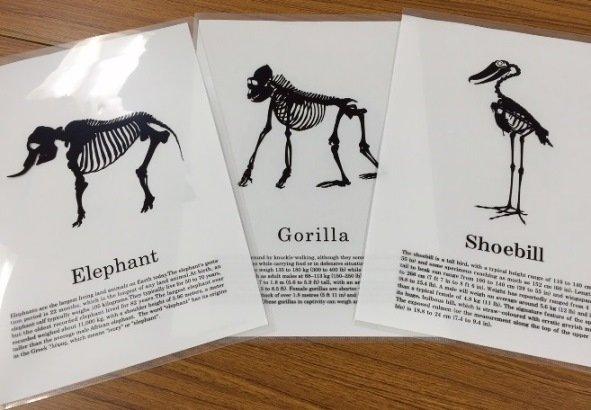 クリアファイル3種、左からゾウ、ゴリラ、ハシビロコウ(写真はいずれも編集部撮影)