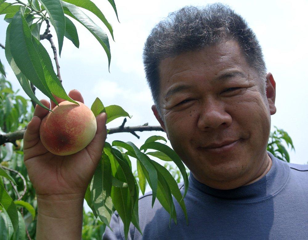 「包近(かねちか)の桃」を世界一にした松本隆弘さん