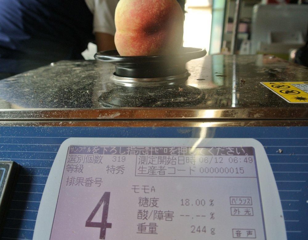 取材日は、6月中旬。普通、この時期の桃はこんな糖度出ません。