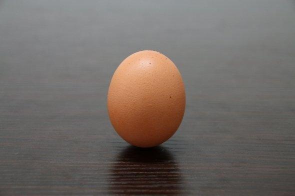 卵が立ってる!