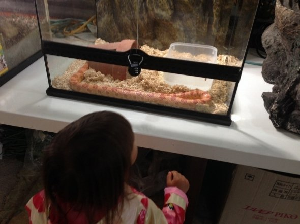 水槽の中にはピンクのヘビ(筆者撮影)