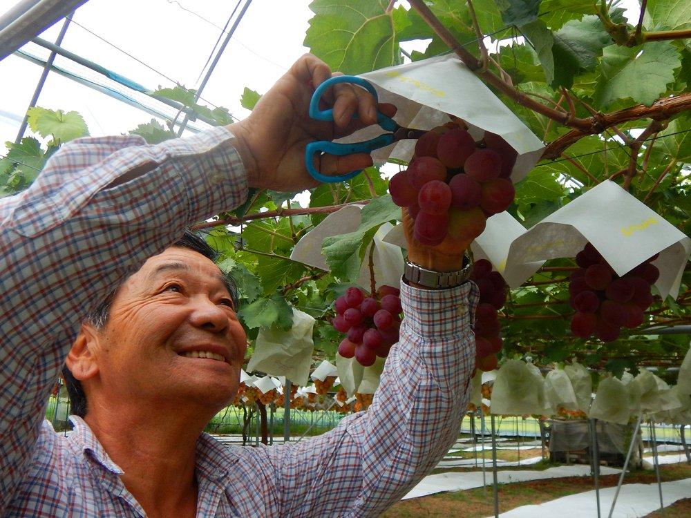 世話される個性豊かなブドウが、未来あふれる子供達のようにも見えてくる