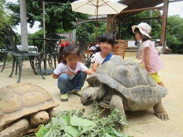 行方不明のアブー(画像右側。渋川動物公園提供、Jタウンネットが一部編集)