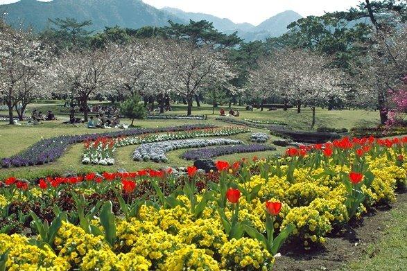 春の別府公園(別府市観光協会・別府市観光写真集より)
