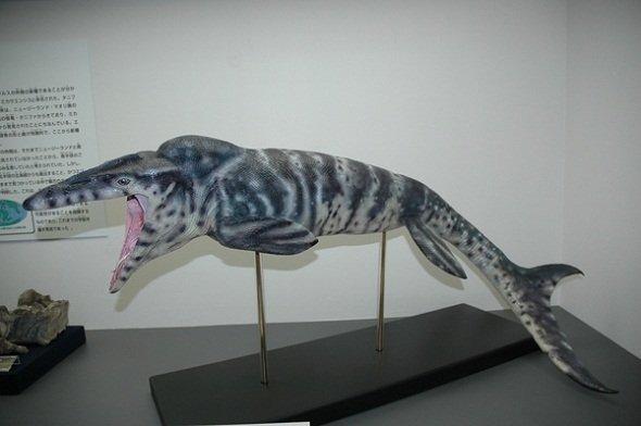 展示されているエゾミカサリュウの全身復元模型(提供:三笠市立博物館)