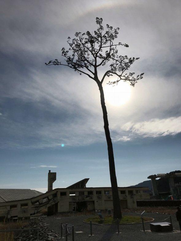 いまや陸前高田を象徴する風景となった「奇跡の一本松」