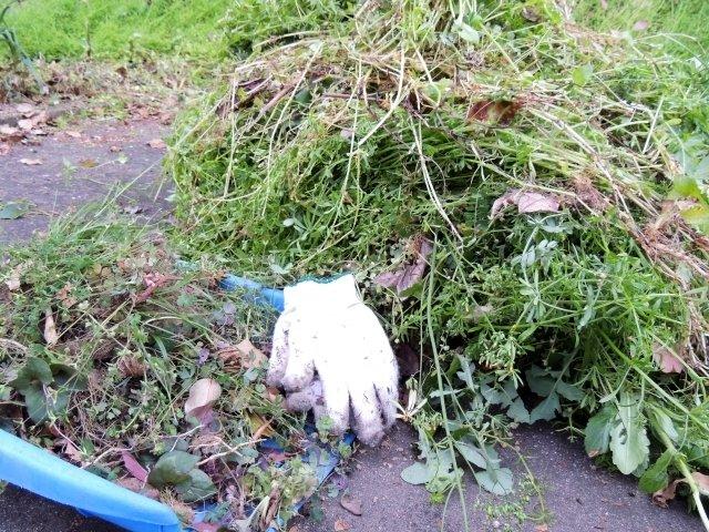 公園の清掃ボランティアでも独自ルール(画像はイメージ)