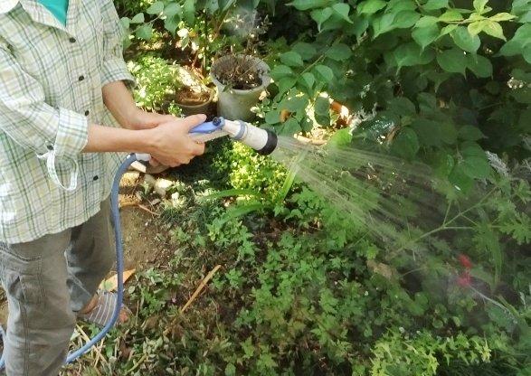 庭の共有にもトラブルがひそんでいた(画像はイメージ)