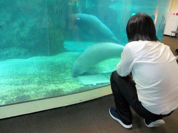 新屋島水族館のアメリカマナティをながめるK編集長