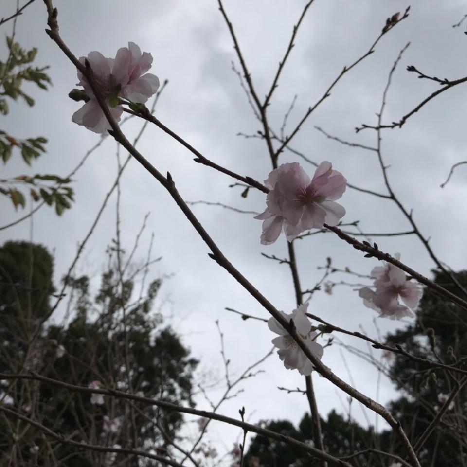 茨城県大洗市内でも。写真はおにざわ(@@oni_M_0403)さん提供