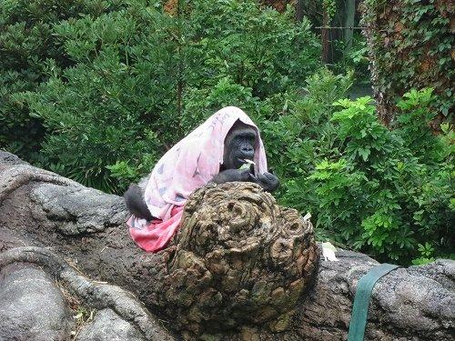 以下画像は、(公財)東京動物園協会提供