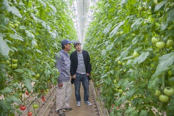 樫村シェフは、倉橋島のトマト、ネギ、ちりめんじゃこ、牡蠣などの生産者を視察した(画像提供:「HASHIWATASHIプロジェクト」事務局)