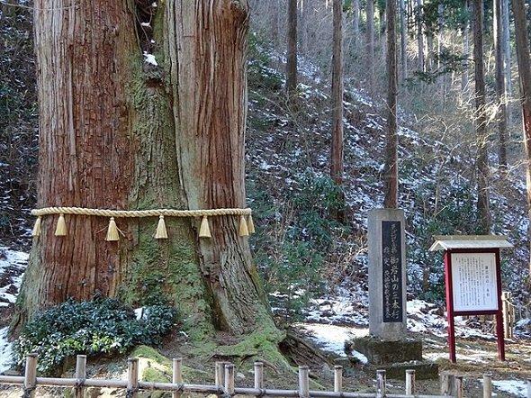 御岩神社三本杉(Papakuroさん撮影、Wikimedia Commonsより)
