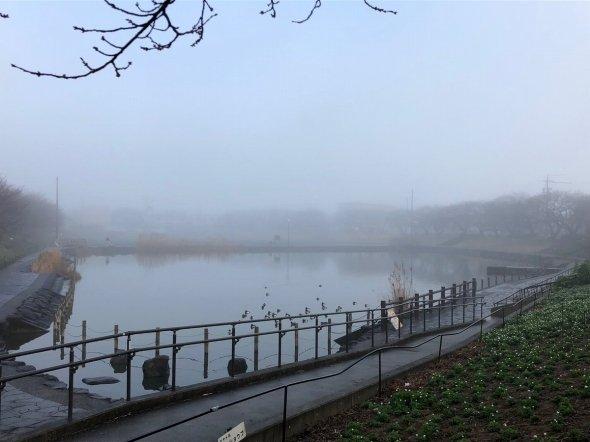 池にも靄がかかってただならぬ雰囲気に(矢澤こころ(@amzn4545)さんのツイートより)