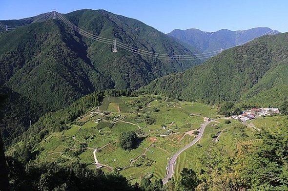 天空の遊歩道から望む上ヶ流茶園(Alpsdakeさん撮影、Wikimedia Commonsより)