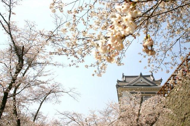 シティーホテルの価格で、桜絶景を楽しめる(画像はイメージ)