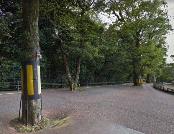 六角道にある木 (C)Google
