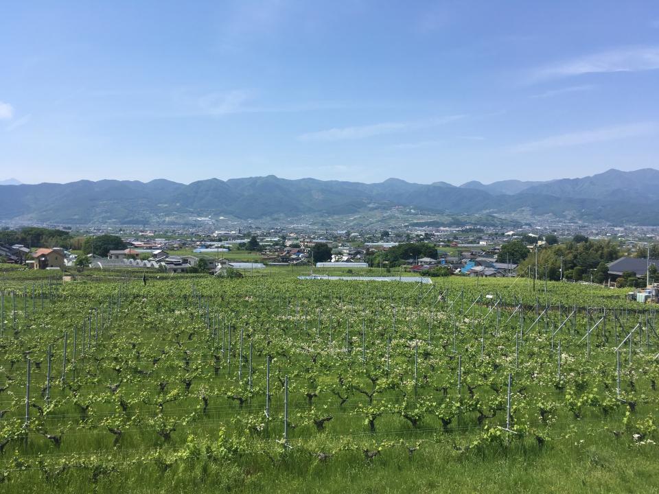甲府盆地や南アルプスの山々を見渡せる広大なぶどう畑