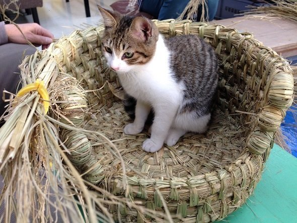 制作中の猫ちぐらに入った猫ちゃん(画像提供:金谷英三さん、以下同)