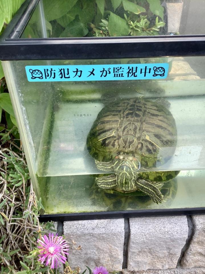 関島岳郎(@sekizima)さんのツイートより
