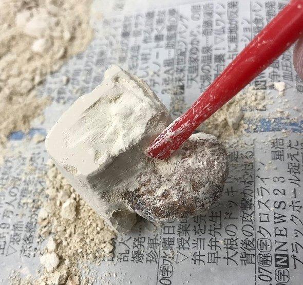 第三の化石を発見