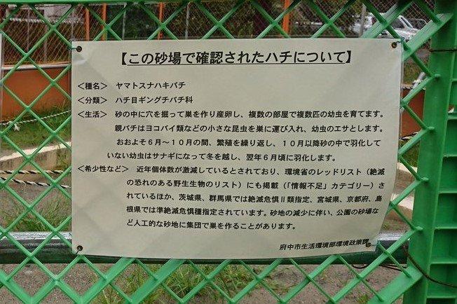 「ヤマトスナハキバチ」の説明