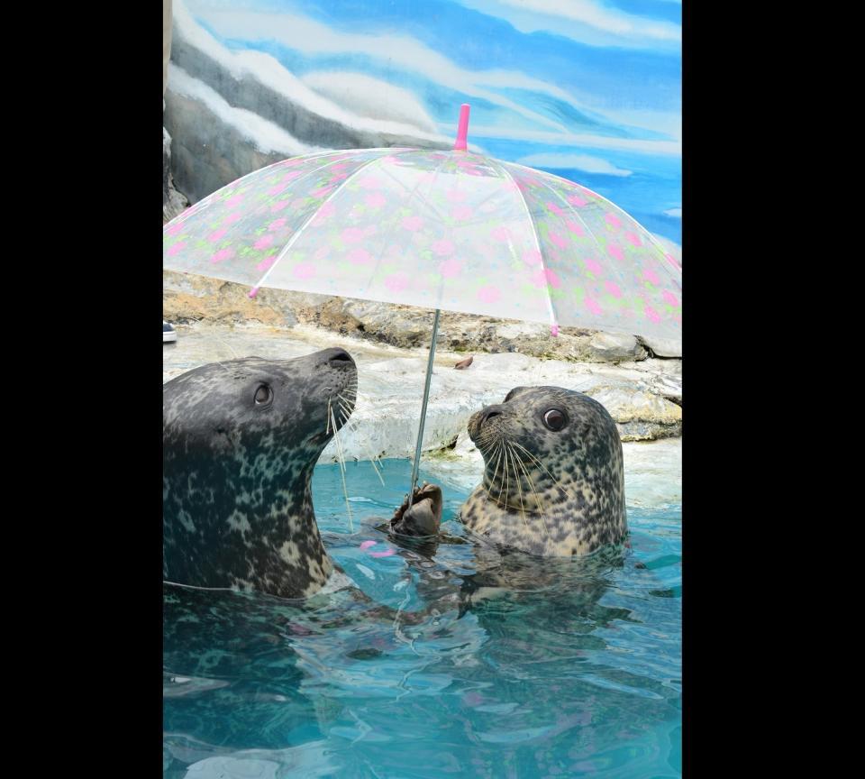 相合傘をする水雨ちゃんと海雨くん。超かわいい(写真は新屋島水族館提供)