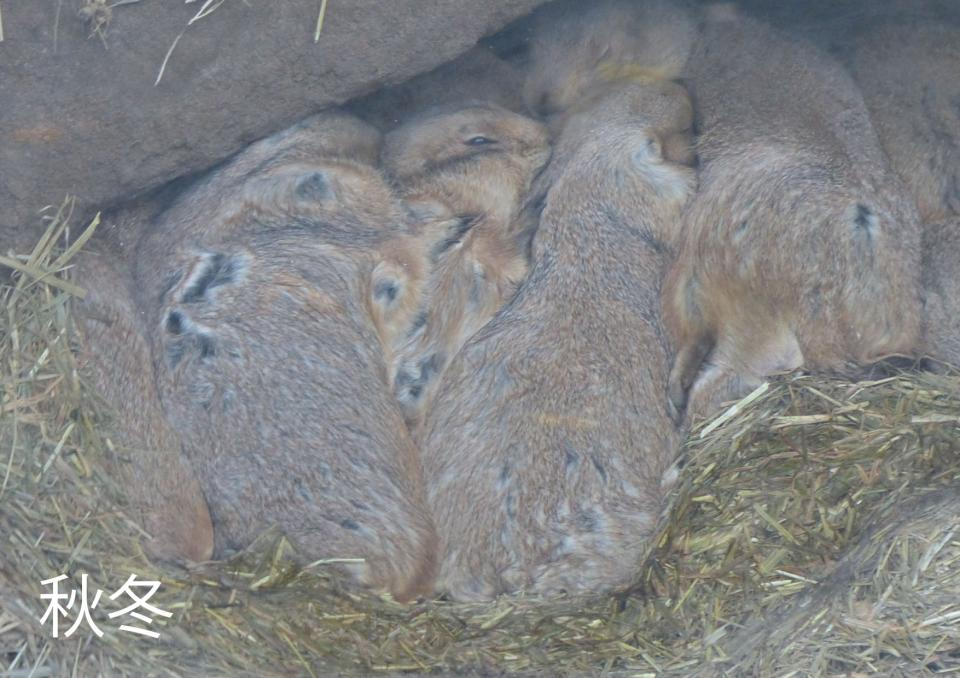 冬はあったかそう(写真は(公財)東京動物園協会提供)