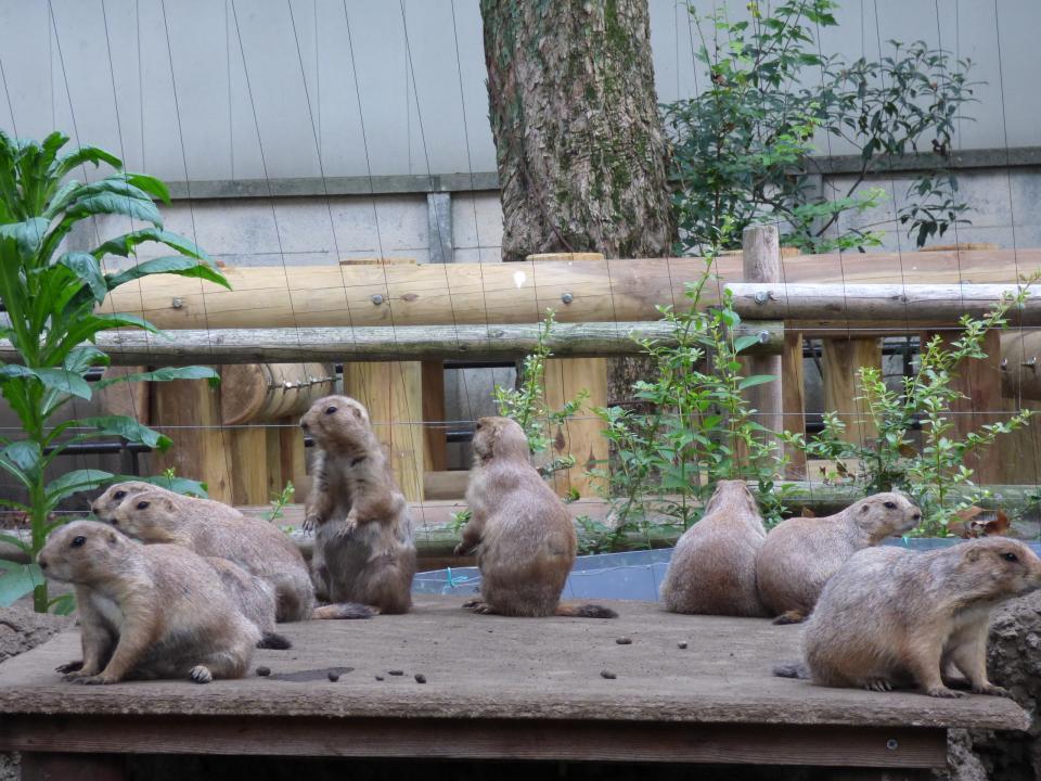 夏の姿(写真は(公財)東京動物園協会提供)