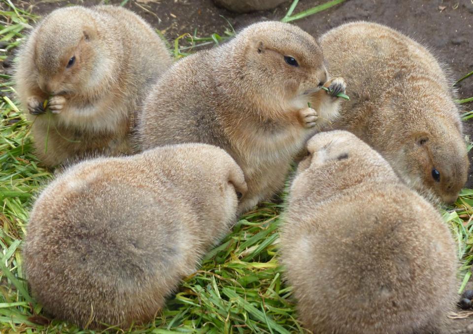 冬の姿(写真は(公財)東京動物園協会提供)