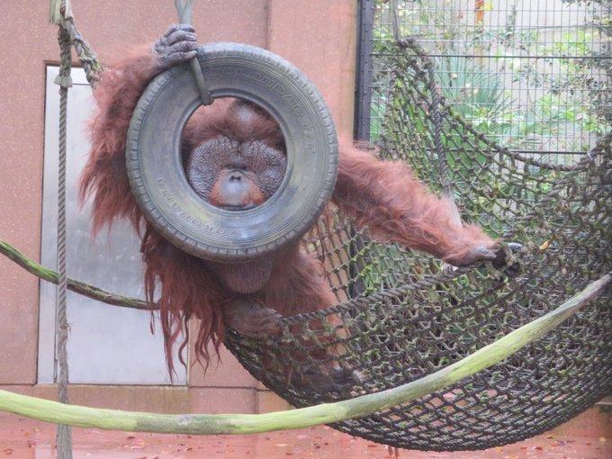 写真は千葉市動物公園(@ChibaZoo)提供
