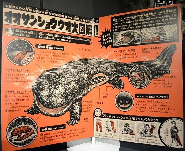オオサンショウウオの展示パネル(画像は、すべて京都水族館提供)