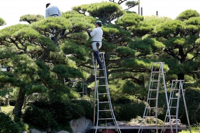 植木の剪定をしたら、ご近所トラブルに発展(画像はイメージ)