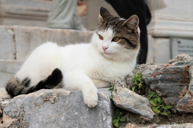 隣人の猫愛がすごい(画像はイメージ)