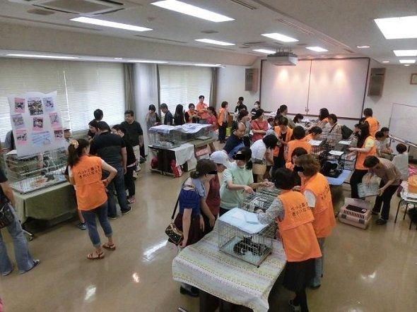 猫の譲渡会の会場内の様子(画像提供:名古屋市健康福祉局健康部)