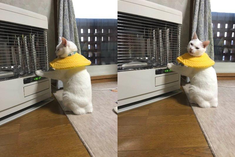 しんばぷー(@shinbaba10)さんのツイートより