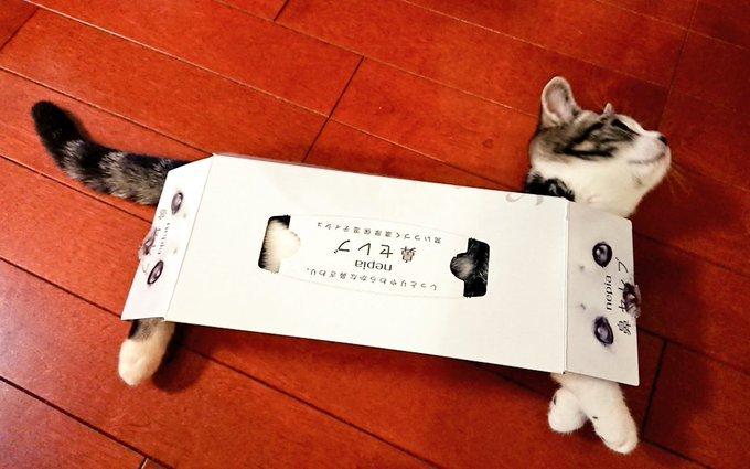 鼻セレブ...(ちひろ@chihiro_gs)