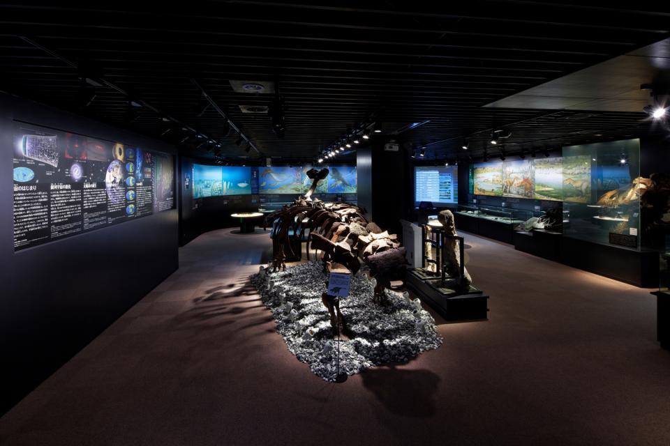 ナイトミュージアムの様子(画像は奥出雲多根自然博物館提供)
