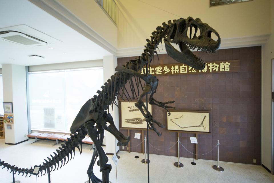昼の博物館(画像は奥出雲多根自然博物館提供)