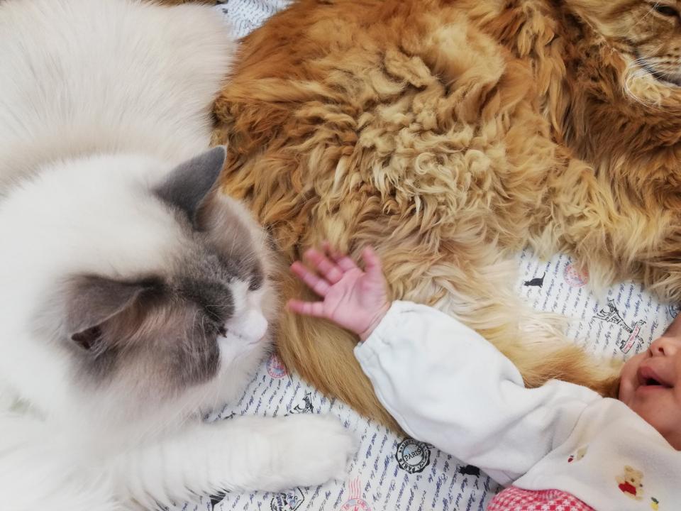 優しい猫たち(写真はやしゅうさんのツイートより)