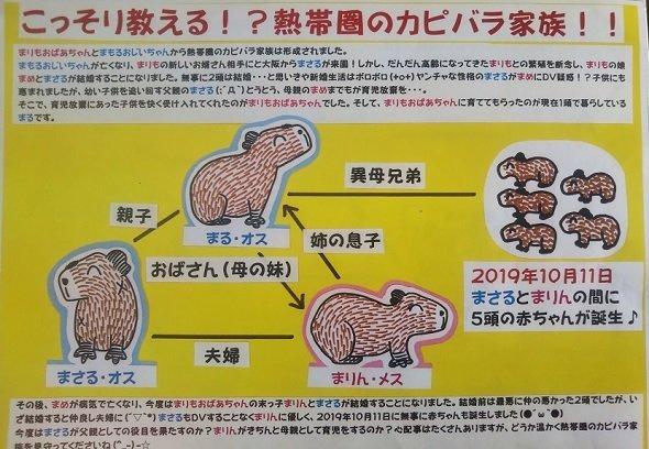 草津熱帯圏のカピバラの解説 (画像提供はすべて草津熱帯圏)